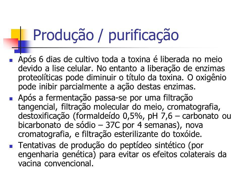 Produção / purificação Após 6 dias de cultivo toda a toxina é liberada no meio devido a lise celular. No entanto a liberação de enzimas proteolíticas