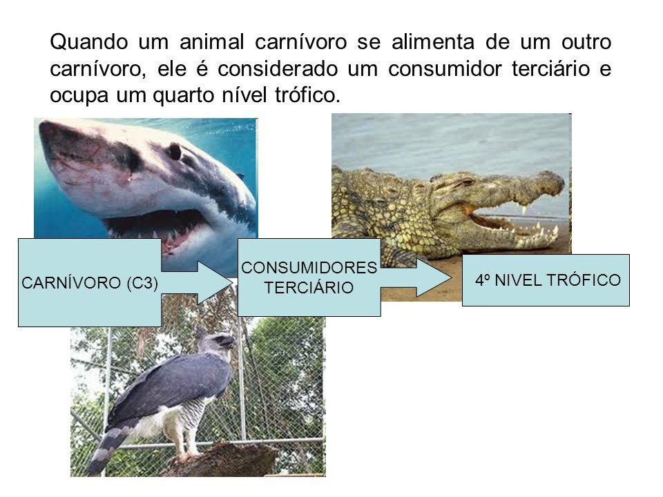 Quando um animal carnívoro se alimenta de um outro carnívoro, ele é considerado um consumidor terciário e ocupa um quarto nível trófico. CARNÍVORO (C3