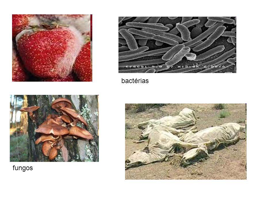 -Todos os seres vivos estabelecem entre si relações nutricionais, pois muitos seres se alimentam de outros seres vivos.