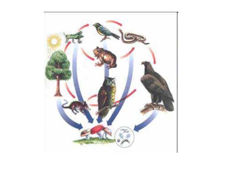 -A natureza é a fonte primária dos recursos necessários para a sobrevivência de todos os seres que habitam na Terra.