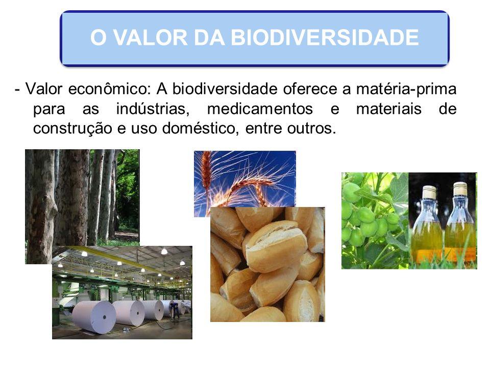 - Valor ecológico: manutenção do ciclo da água, proteção do solo, fertilidade do solo, reciclagem de nutrientes e fotossíntese.