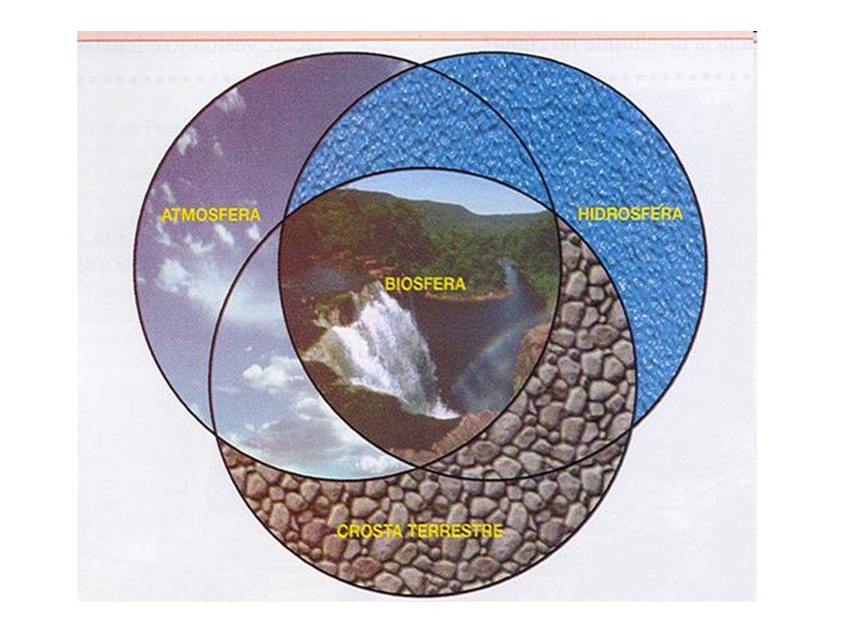 O meio ambiente é formado por: Componentes bióticos: - Microorganismos - Animais - Plantas Componentes abióticos: - Luz (fotossíntese) - Temperatura - Água/umidade - Ar - Pressão