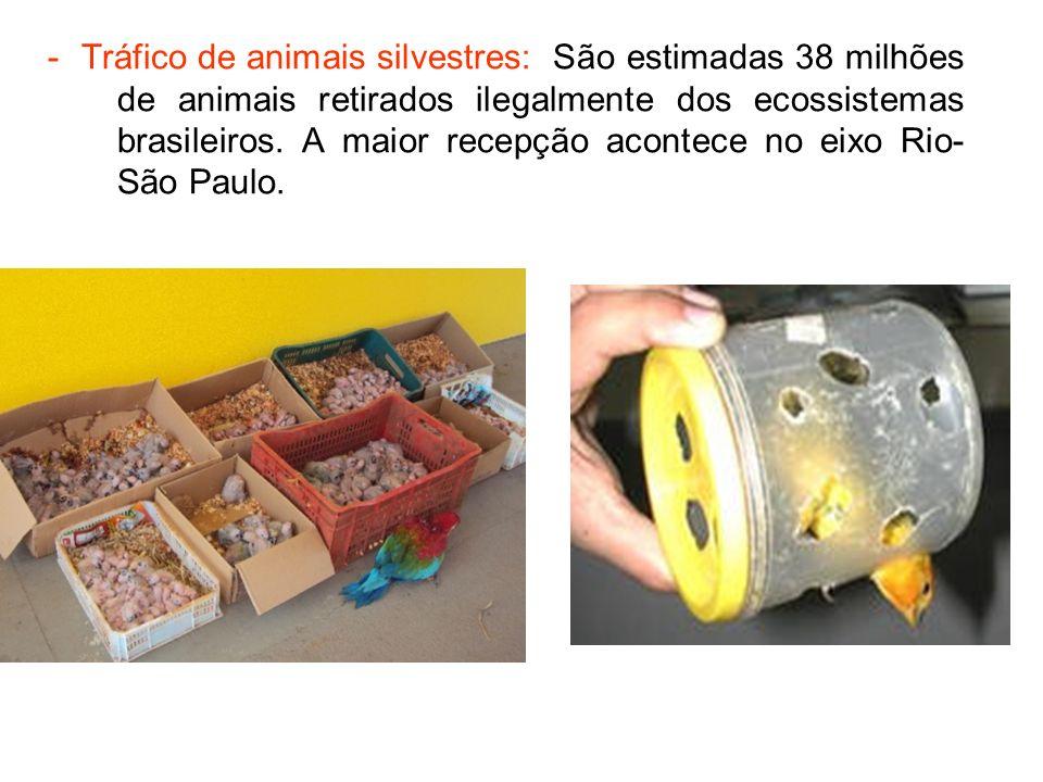 - Tráfico de animais silvestres: São estimadas 38 milhões de animais retirados ilegalmente dos ecossistemas brasileiros. A maior recepção acontece no