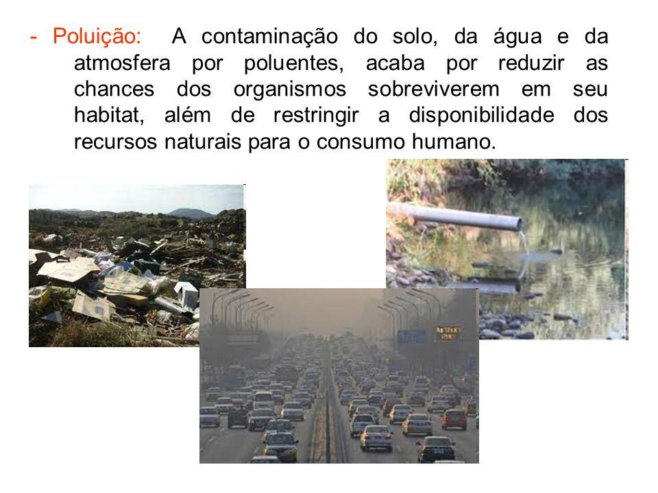 - Muitos animais estão ameaçados de extinção por causa da ação predatória do ser humano.