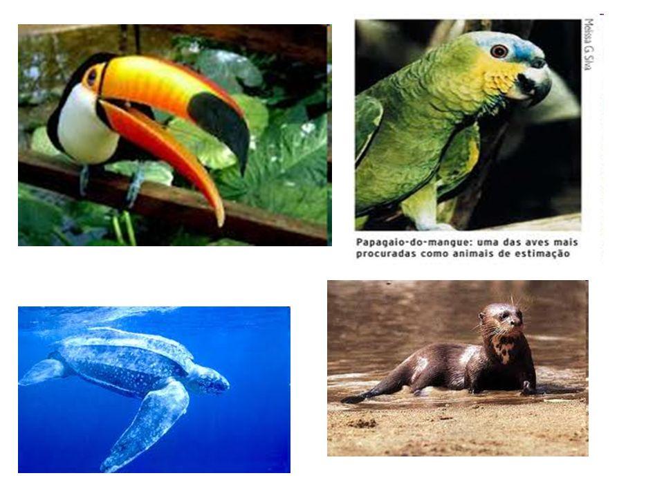 -A lista de animais em extinção é imensa.