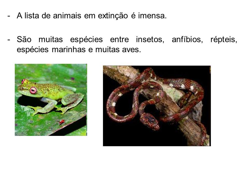 -A lista de animais em extinção é imensa. -São muitas espécies entre insetos, anfíbios, répteis, espécies marinhas e muitas aves.