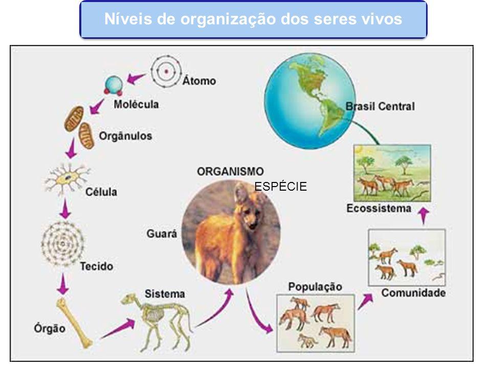 Todos os seres vivos estabelecem algum tipo de relação: habitat, alimentação, reprodução, proteção, etc.