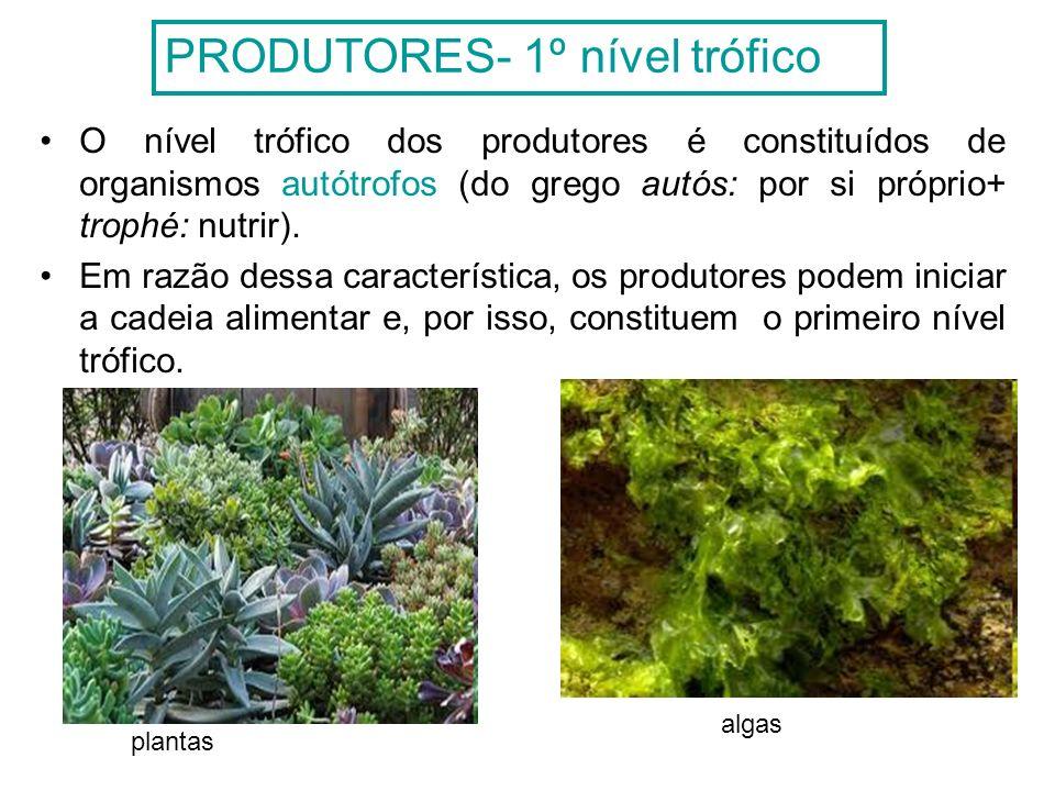 A produção do alimento ocorre por meio de dois processos: Quimiossíntese: É a produção de matéria orgânica através da oxidação de substâncias minerais, sem recorrer à luz solar.
