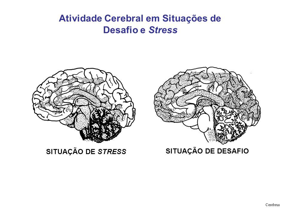 SITUAÇÃO DE DESAFIO SITUAÇÃO DE STRESS Atividade Cerebral em Situações de Desafio e Stress Cerebrus