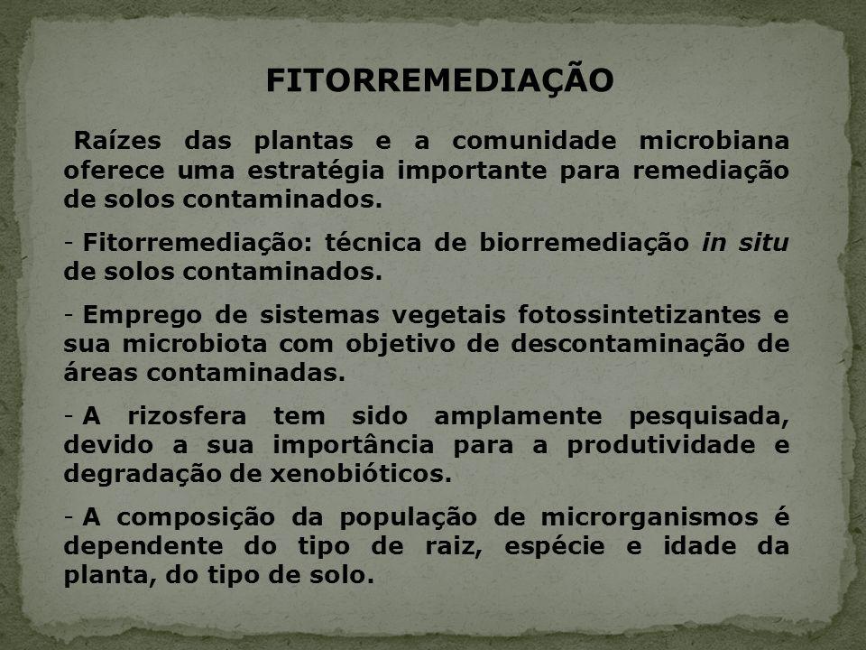 Raízes das plantas e a comunidade microbiana oferece uma estratégia importante para remediação de solos contaminados. - Fitorremediação: técnica de bi