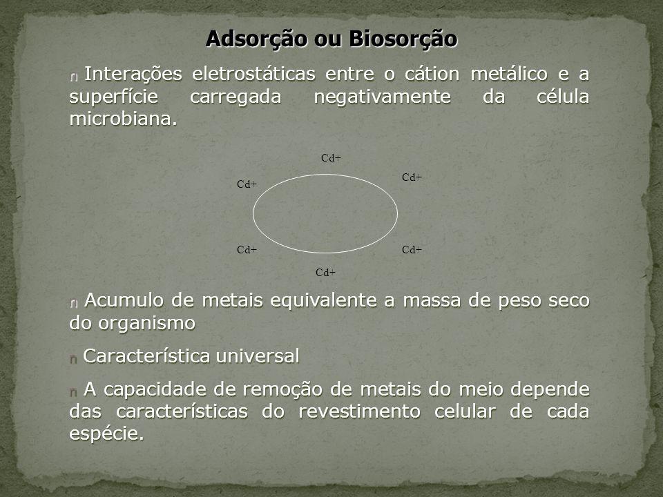 Adsorção ou Biosorção n Interações eletrostáticas entre o cátion metálico e a superfície carregada negativamente da célula microbiana. n Acumulo de me