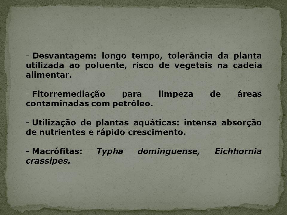 - Desvantagem: longo tempo, tolerância da planta utilizada ao poluente, risco de vegetais na cadeia alimentar. - Fitorremediação para limpeza de áreas