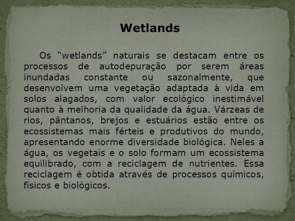 Os wetlands naturais se destacam entre os processos de autodepuração por serem áreas inundadas constante ou sazonalmente, que desenvolvem uma vegetaçã