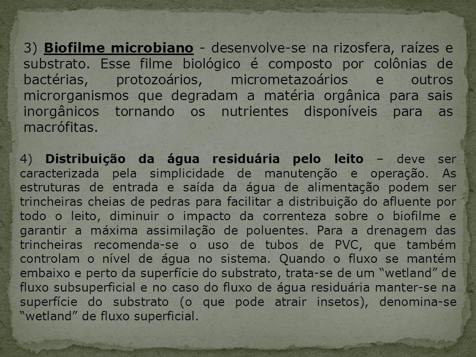 3) Biofilme microbiano - desenvolve-se na rizosfera, raízes e substrato. Esse filme biológico é composto por colônias de bactérias, protozoários, micr