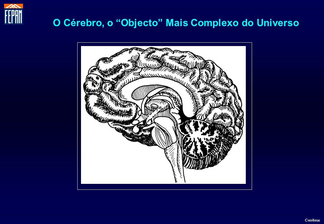 O Cérebro, o Objecto Mais Complexo do Universo Cerebrus
