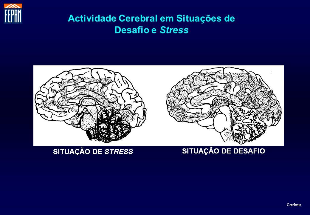 SITUAÇÃO DE DESAFIO SITUAÇÃO DE STRESS Actividade Cerebral em Situações de Desafio e Stress Cerebrus