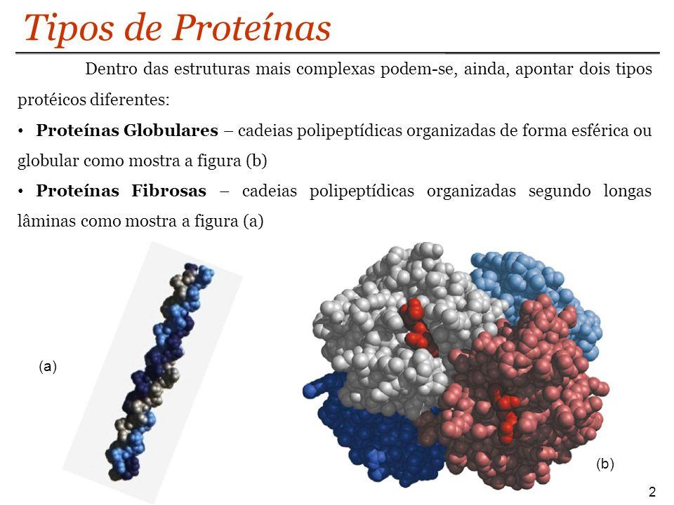 Tipos de Proteínas 2 Dentro das estruturas mais complexas podem-se, ainda, apontar dois tipos protéicos diferentes: Proteínas Globulares – cadeias pol