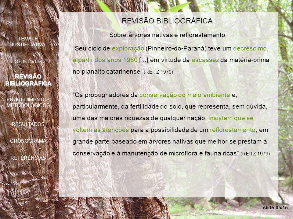 slide 05/15 REVISÃO BIBLIOGRÁFICA Sobre árvores nativas e reflorestamento Seu ciclo de exploração (Pinheiro-do-Paraná) teve um decréscimo, a partir do