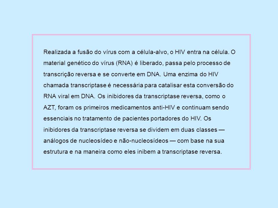 Realizada a fusão do vírus com a célula-alvo, o HIV entra na célula. O material genético do vírus (RNA) é liberado, passa pelo processo de transcrição