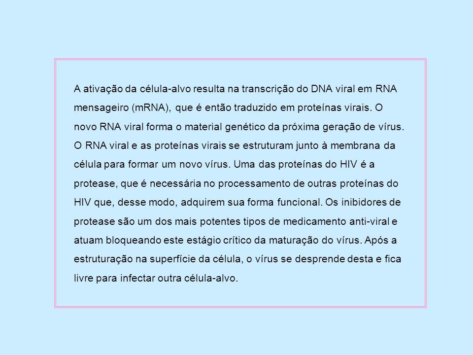 A ativação da célula-alvo resulta na transcrição do DNA viral em RNA mensageiro (mRNA), que é então traduzido em proteínas virais. O novo RNA viral fo