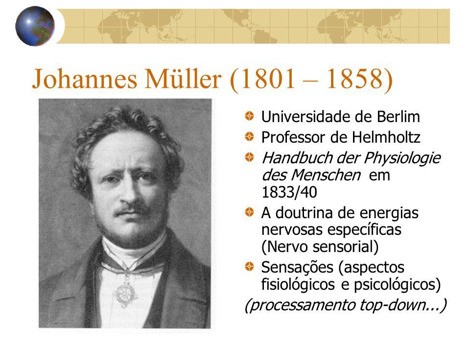Johannes Müller (1801 – 1858) Universidade de Berlim Professor de Helmholtz Handbuch der Physiologie des Menschen em 1833/40 A doutrina de energias ne