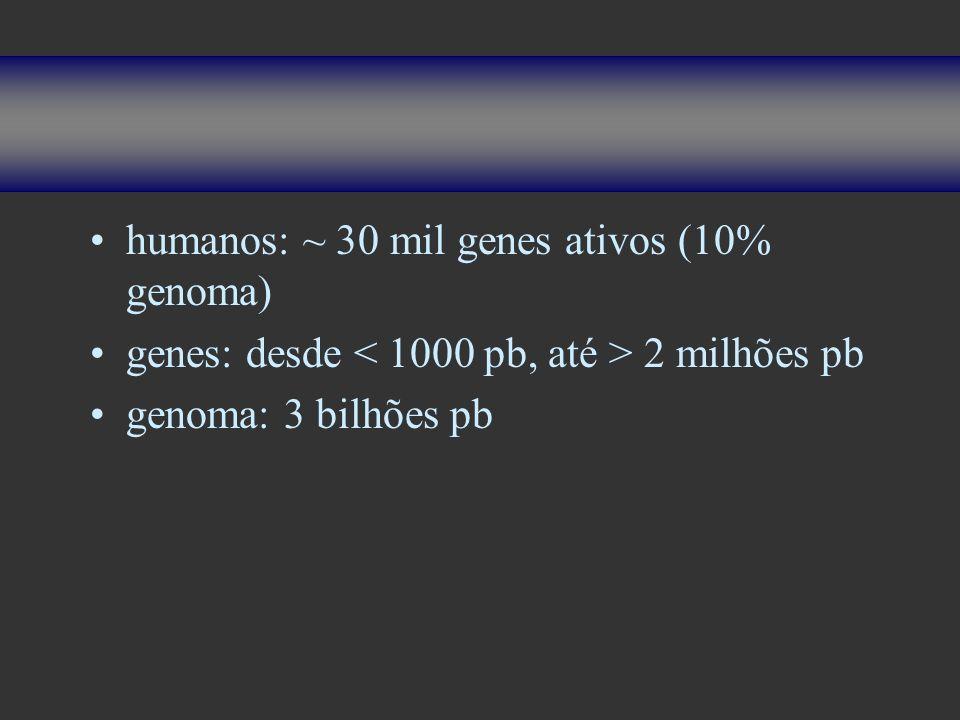 humanos: ~ 30 mil genes ativos (10% genoma) genes: desde 2 milhões pb genoma: 3 bilhões pb