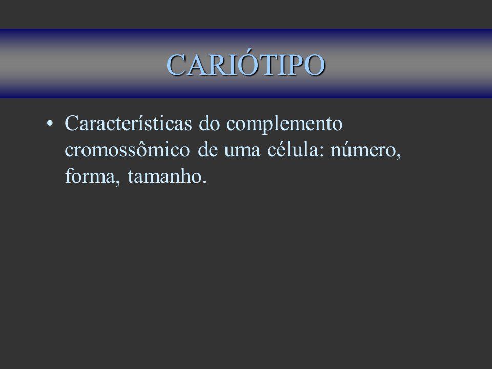CARIÓTIPO Características do complemento cromossômico de uma célula: número, forma, tamanho.