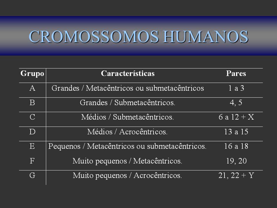 CROMOSSOMOS HUMANOS