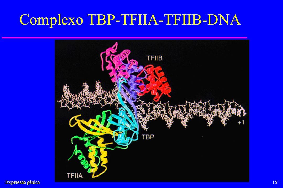 Expressão gênica15 Complexo TBP-TFIIA-TFIIB-DNA