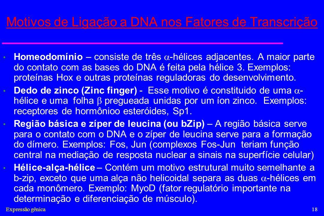 Expressão gênica18 Motivos de Ligação a DNA nos Fatores de Transcrição Homeodomínio – consiste de três -hélices adjacentes. A maior parte do contato c
