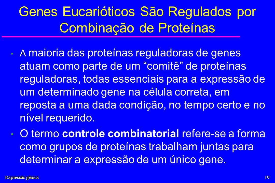 Expressão gênica19 Genes Eucarióticos São Regulados por Combinação de Proteínas A maioria das proteínas reguladoras de genes atuam como parte de um co