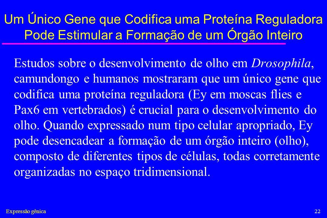 Expressão gênica22 Um Único Gene que Codifica uma Proteína Reguladora Pode Estimular a Formação de um Órgão Inteiro Estudos sobre o desenvolvimento de