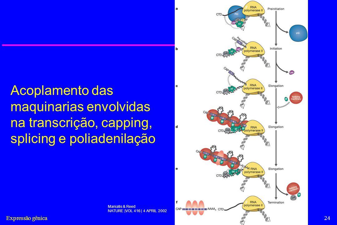 Expressão gênica24 Acoplamento das maquinarias envolvidas na transcrição, capping, splicing e poliadenilação Maniatis & Reed NATURE |VOL 416 | 4 APRIL