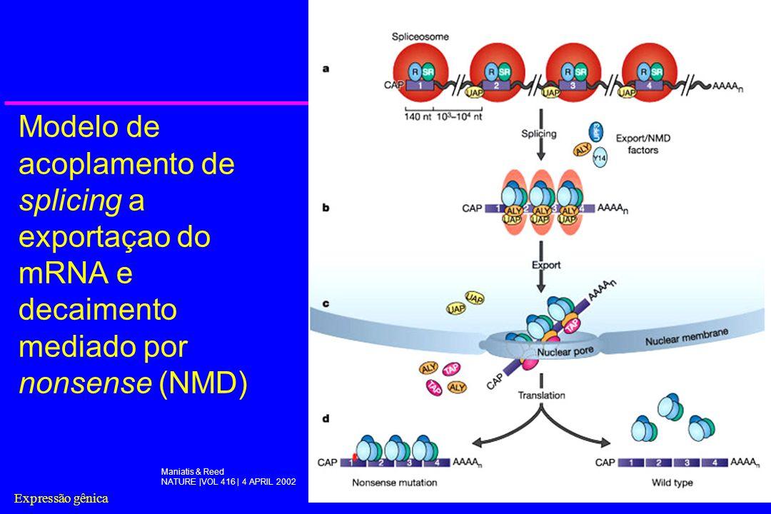 Expressão gênica25 Modelo de acoplamento de splicing a exportaçao do mRNA e decaimento mediado por nonsense (NMD) Maniatis & Reed NATURE |VOL 416 | 4
