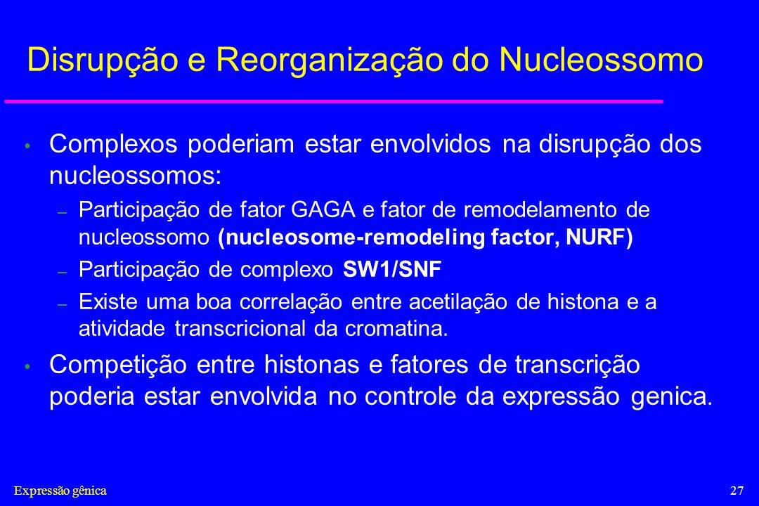 Expressão gênica27 Disrupção e Reorganização do Nucleossomo Complexos poderiam estar envolvidos na disrupção dos nucleossomos: – Participação de fator