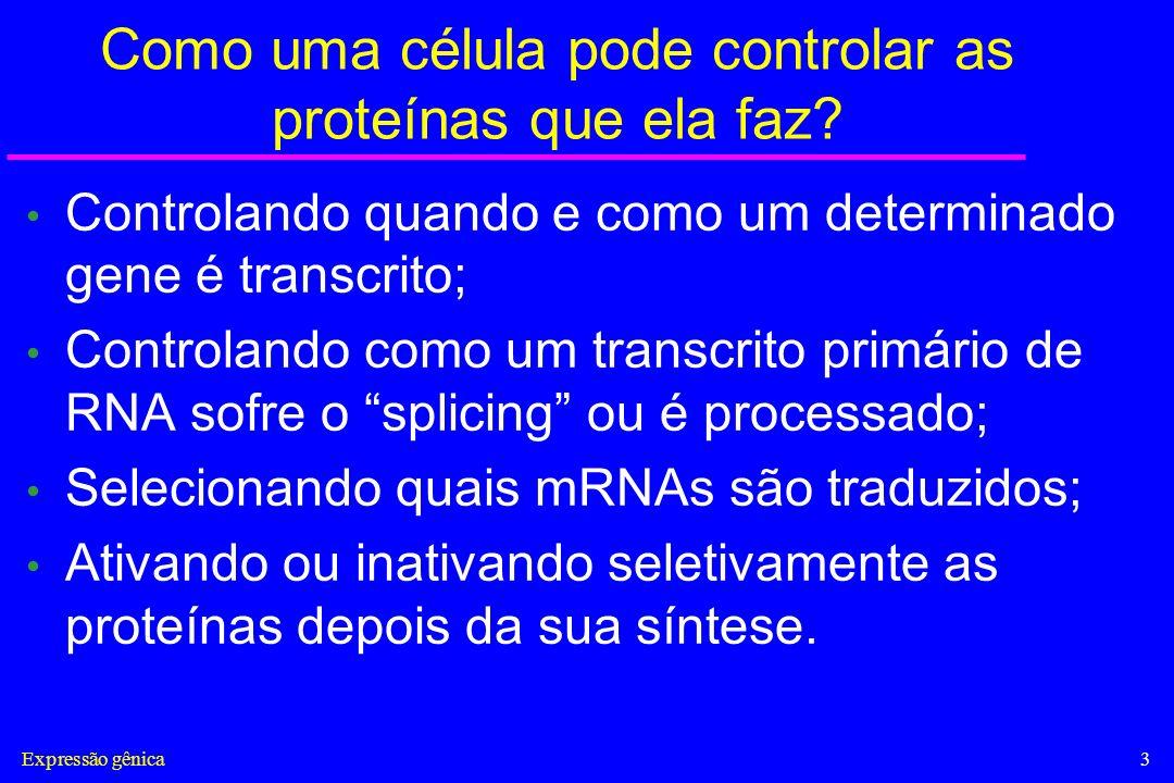 Expressão gênica24 Acoplamento das maquinarias envolvidas na transcrição, capping, splicing e poliadenilação Maniatis & Reed NATURE |VOL 416 | 4 APRIL 2002