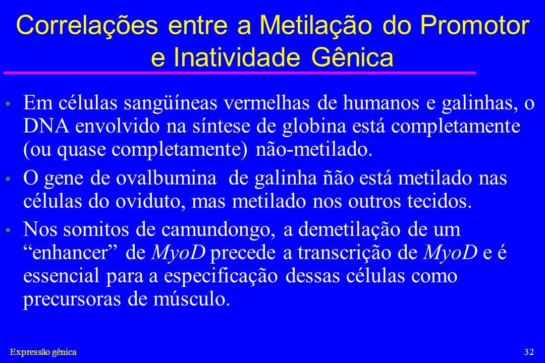 Expressão gênica32 Correlações entre a Metilação do Promotor e Inatividade Gênica Em células sangüíneas vermelhas de humanos e galinhas, o DNA envolvi
