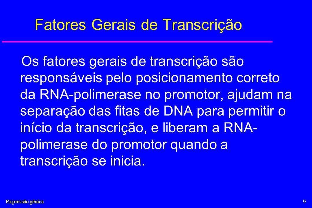 Expressão gênica9 Fatores Gerais de Transcrição Os fatores gerais de transcrição são responsáveis pelo posicionamento correto da RNA-polimerase no pro
