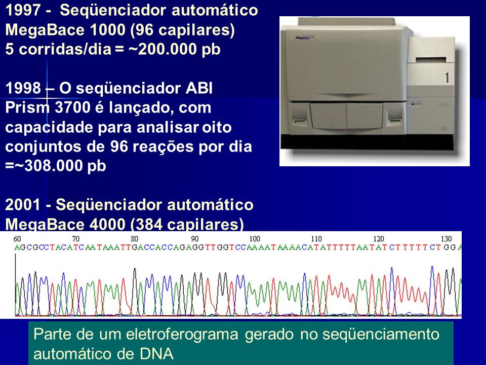 15 1997 - Seqüenciador automático MegaBace 1000 (96 capilares) 5 corridas/dia = ~200.000 pb 1998 – O seqüenciador ABI Prism 3700 é lançado, com capaci