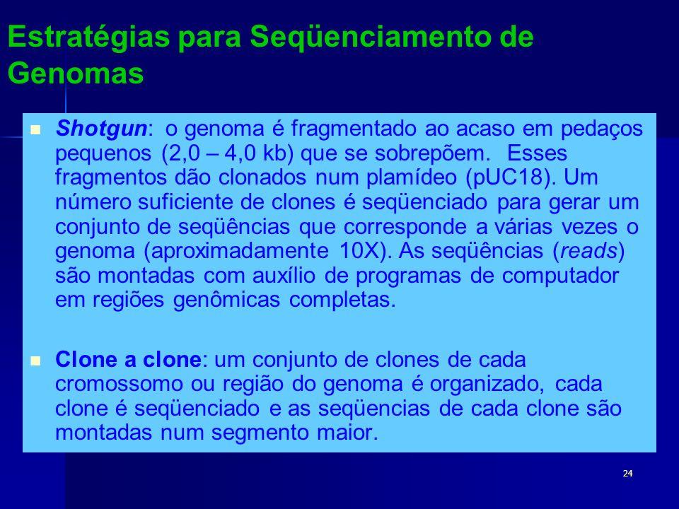 24 Estratégias para Seqüenciamento de Genomas Shotgun: o genoma é fragmentado ao acaso em pedaços pequenos (2,0 – 4,0 kb) que se sobrepõem. Esses frag