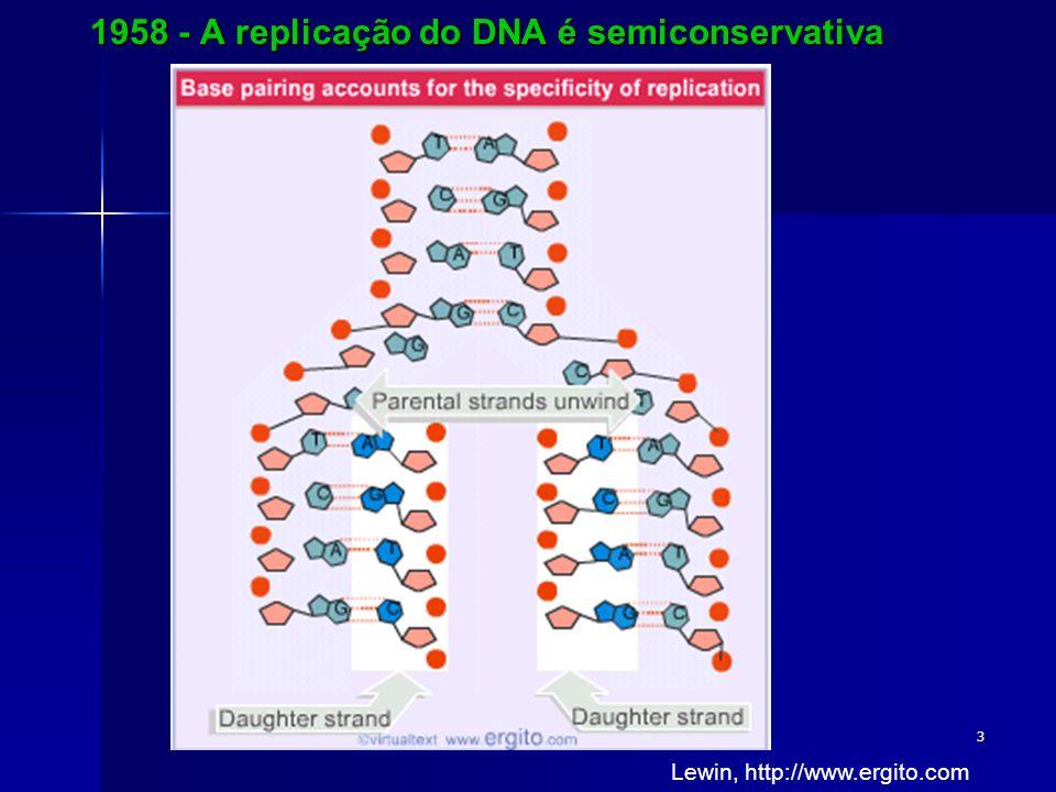 3 1958 - A replicação do DNA é semiconservativa Lewin, http://www.ergito.com