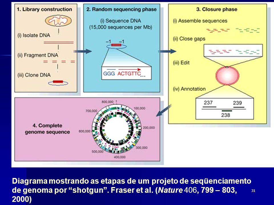 31 Diagrama mostrando as etapas de um projeto de seqüenciamento de genoma por shotgun. Fraser et al. (Nature 406, 799 – 803, 2000)