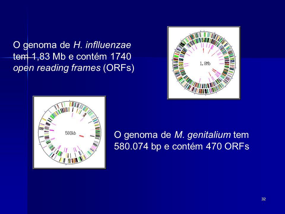 32 O genoma de H. inflluenzae tem 1,83 Mb e contém 1740 open reading frames (ORFs) O genoma de M. genitalium tem 580.074 bp e contém 470 ORFs