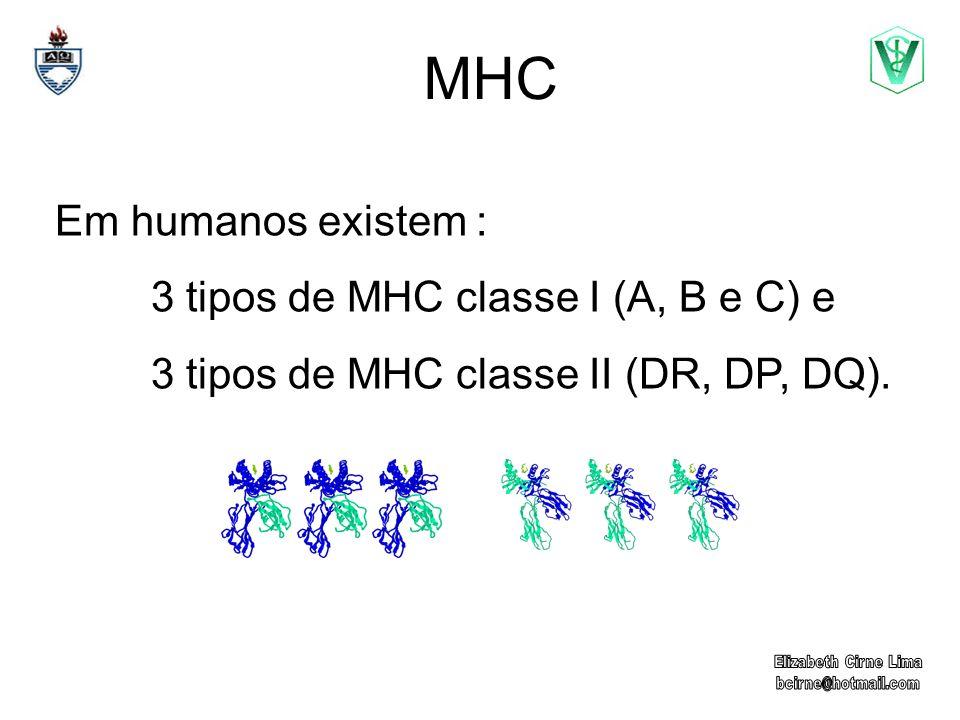 MHC Em humanos existem : 3 tipos de MHC classe I (A, B e C) e 3 tipos de MHC classe II (DR, DP, DQ).