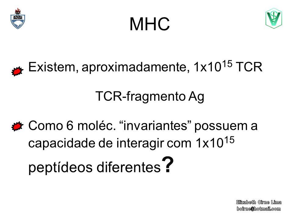 MHC Existem, aproximadamente, 1x10 15 TCR TCR-fragmento Ag Como 6 moléc. invariantes possuem a capacidade de interagir com 1x10 15 peptídeos diferente