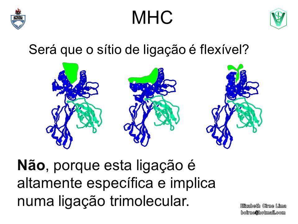 MHC Será que o sítio de ligação é flexível? Não, porque esta ligação é altamente específica e implica numa ligação trimolecular.