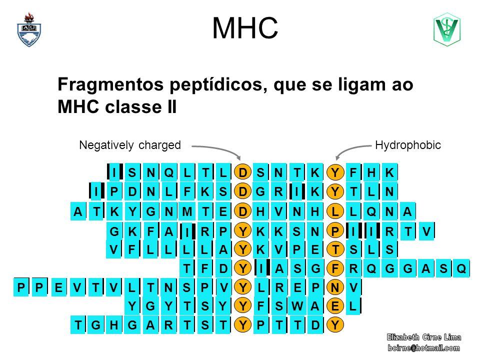 MHC Fragmentos peptídicos, que se ligam ao MHC classe II YFQGGQRASASGIDTF DYLNTR I KGSLFKNIPD DYHKFNTKS LQLTNIS YPIRTIVKSNKPA I RFGK DLQNALVNHHENMTGTK