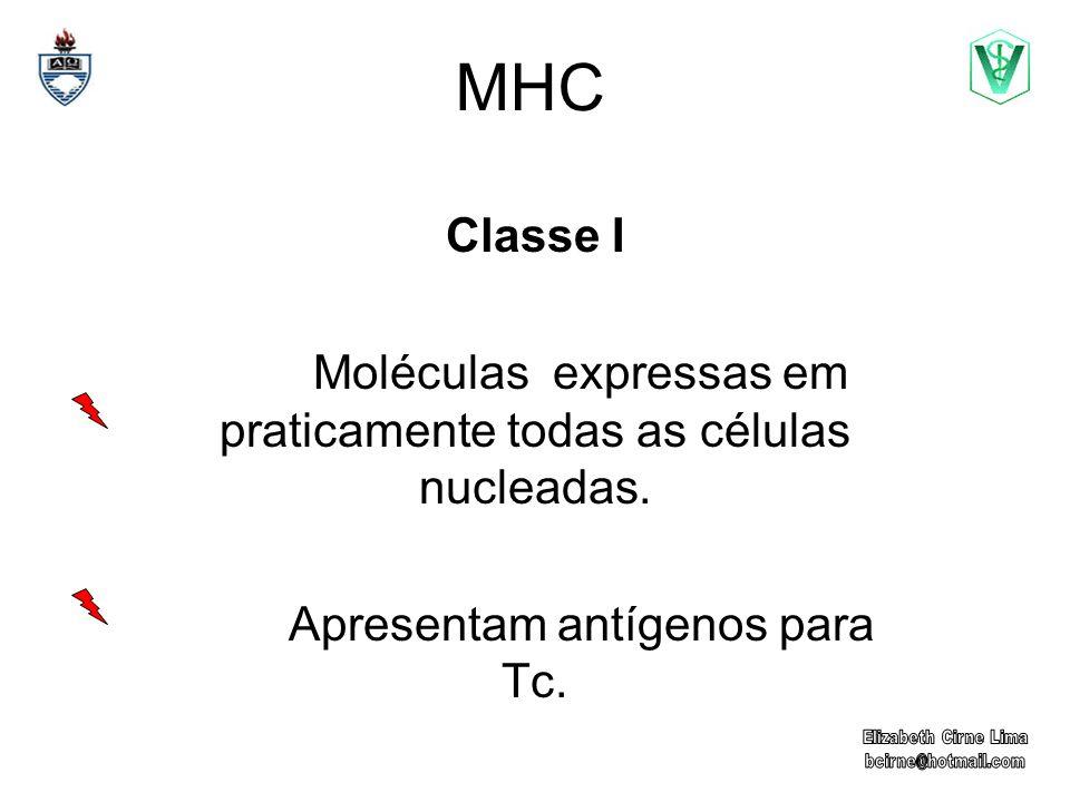 MHC Classe I Moléculas expressas em praticamente todas as células nucleadas. Apresentam antígenos para Tc.