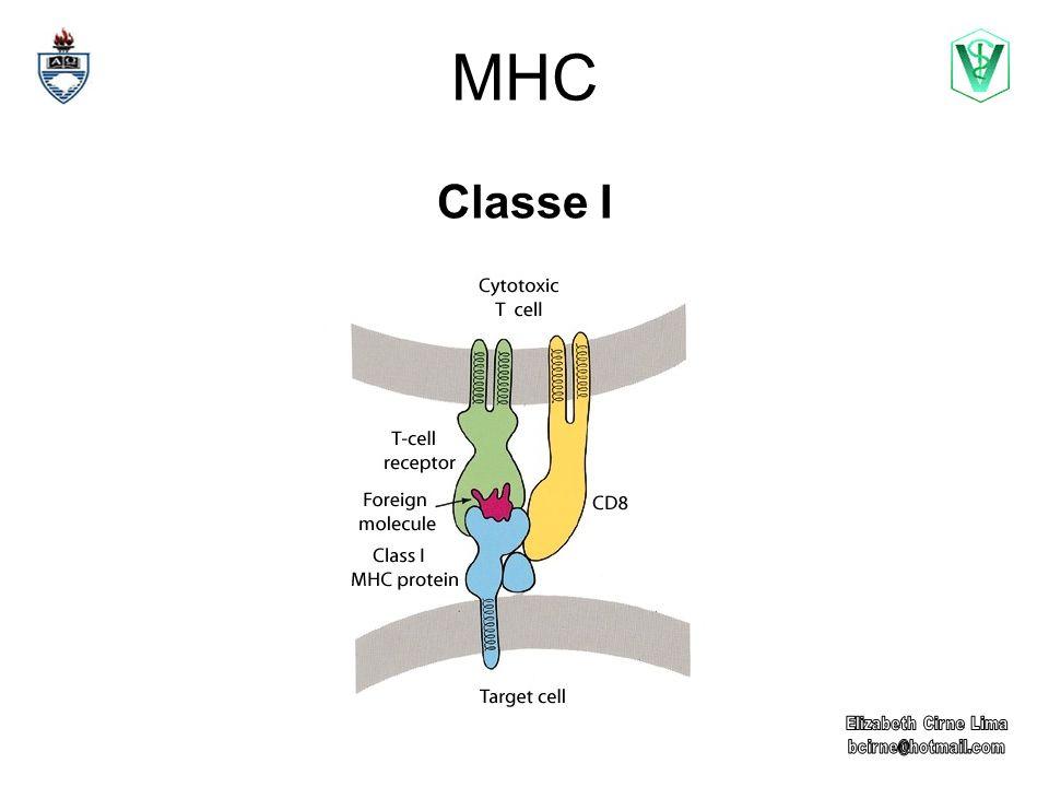MHC Classe I
