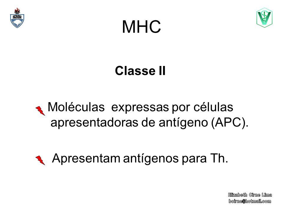 MHC Classe II Moléculas expressas por células apresentadoras de antígeno (APC). Apresentam antígenos para Th.